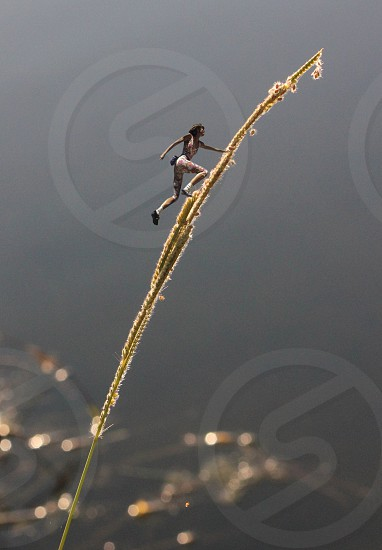 weed weed climber climber fantasy macro miniature water sunlight bokeh fun humorous unusual digital art photo