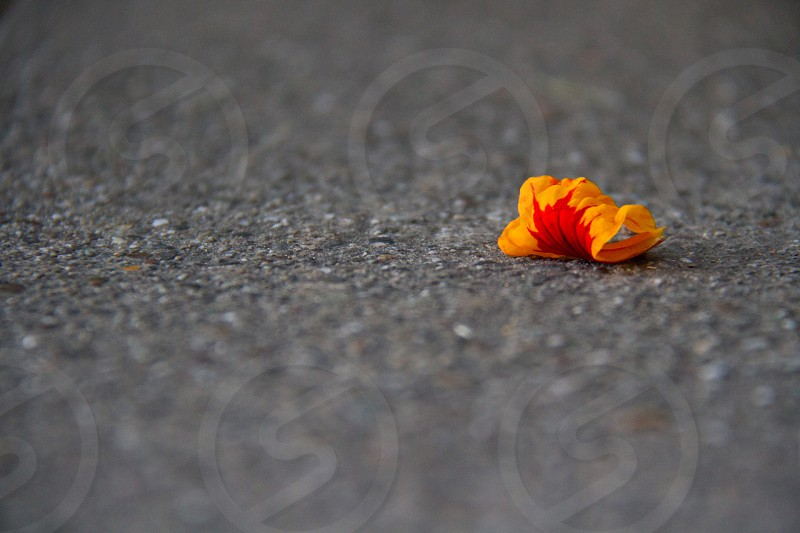 Flower Cement Orange Wilting. photo