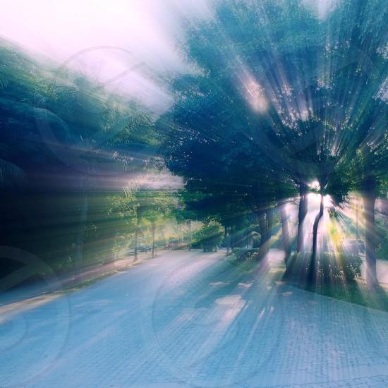 sun rays on green tree view photo