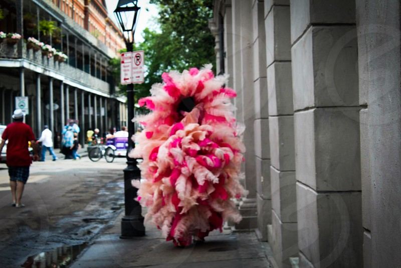 person covered in pink and white feathers photo