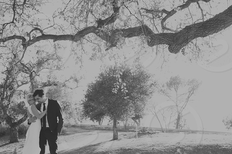 wedding couple under a tree grayscale photography photo