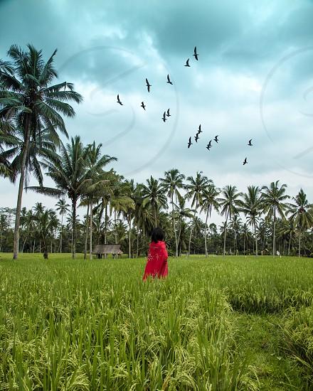 Bali green  photo