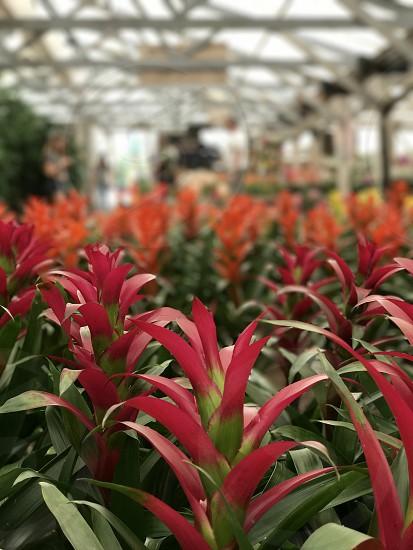 Flowers buy farms  los angeles  photo