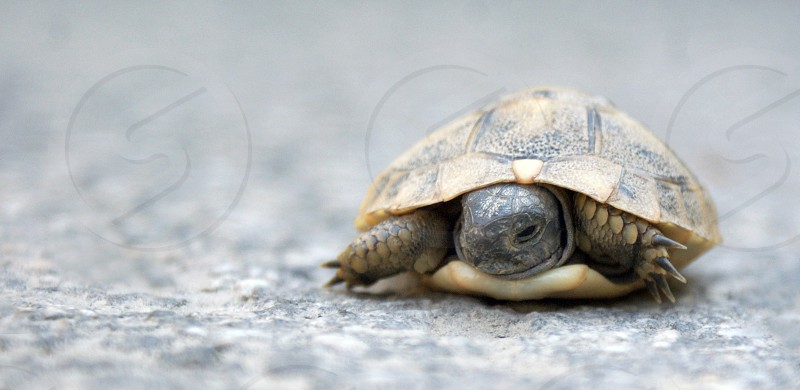 brown turtle photo