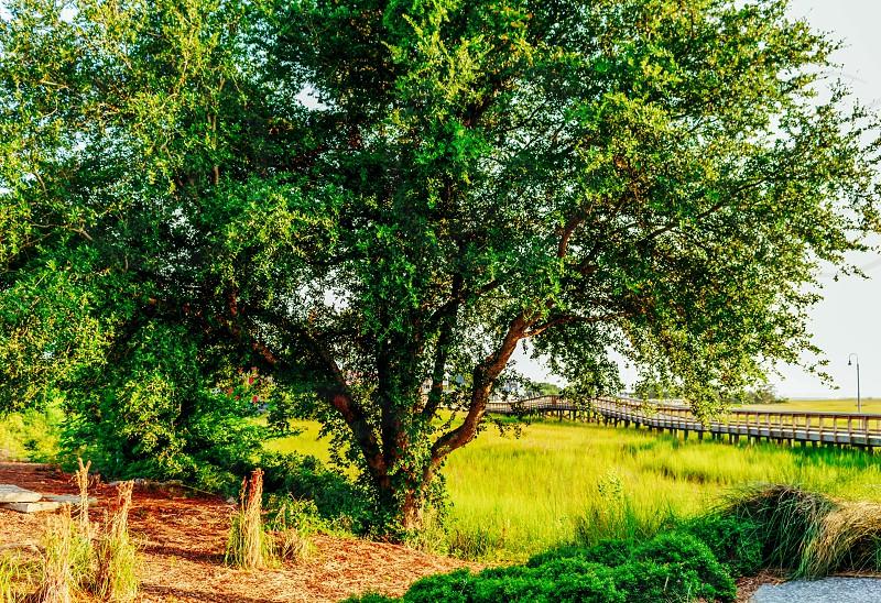 Shem Creek South Carolina  photo