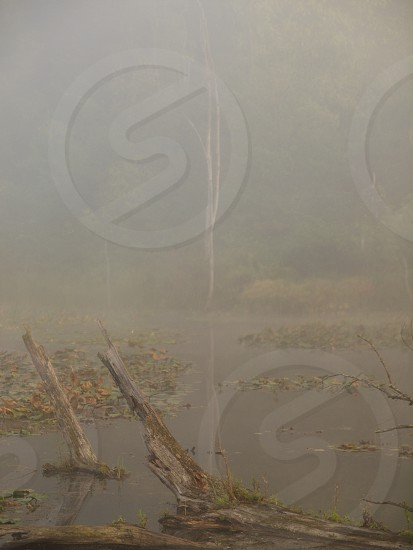 Marsh in morning fog. Mist. Trees. Pond. Desaturate. Muted. photo