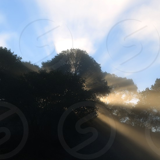 The morning sun beaming through a tree and clouds on a mountainside photo