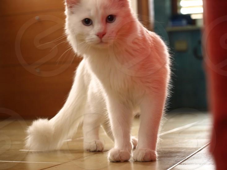 Remwmber my cat Bijou? photo