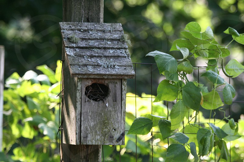 Birdhouse in the garden. photo