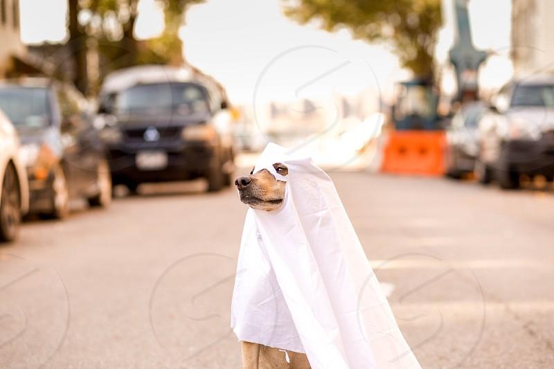 Doggy in halloween costume photo