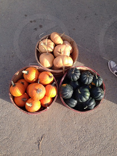 orange small pumpkin photo