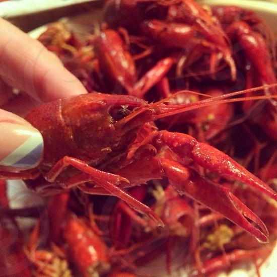 Tasty crawfish photo