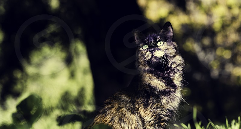 Nice green eyes cat with front face and lovely bokeh background photo