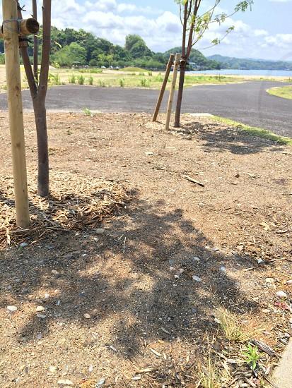 正午の短い陰(Short shade of noon) photo