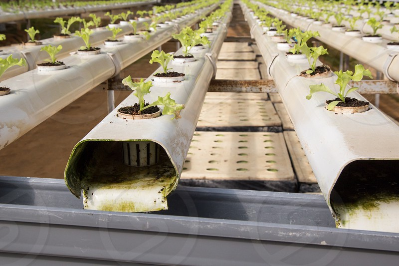 Green Coral hydroponic farm photo