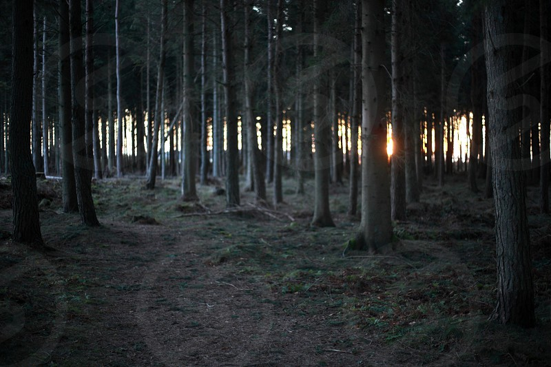 Light through the trees photo