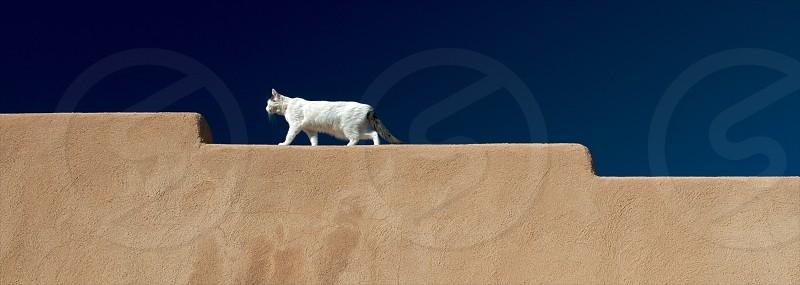 white cat walking along beige concrete wall photo