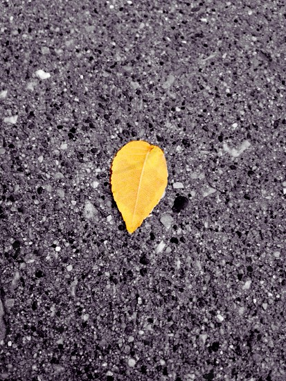 yellow pointed leaf photo