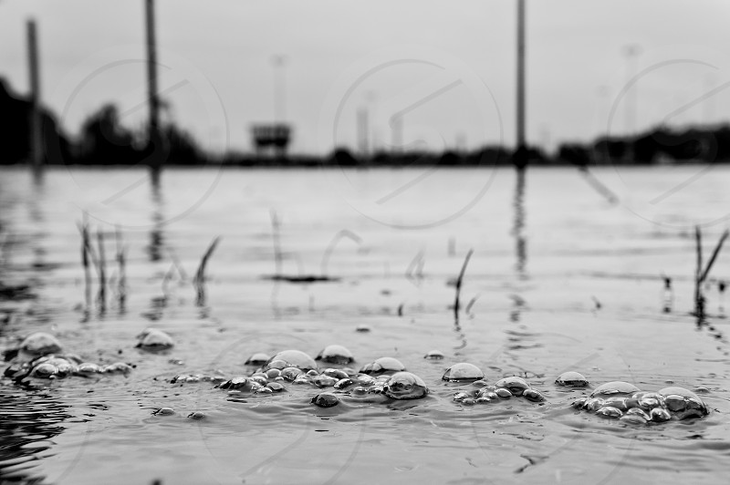 Dresden: a soccer field sunk in the disastrous flood 2012  photo