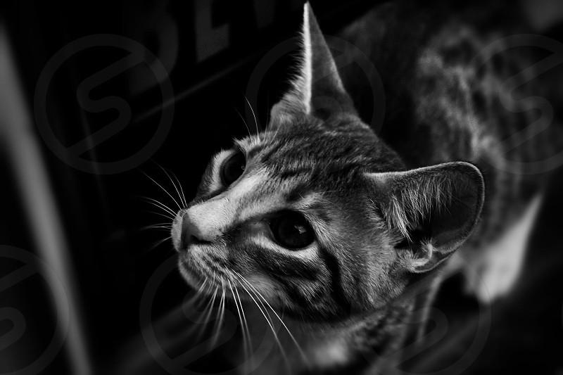 Kitty  #animals #pets #cats photo