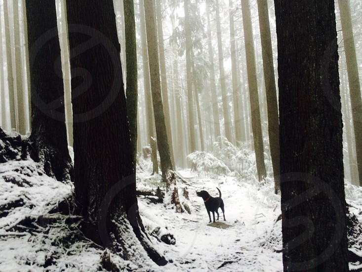 Mount Seymour Provincial Park BC photo