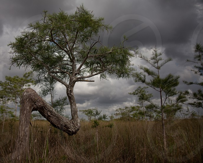 brown curved tree on grass photo