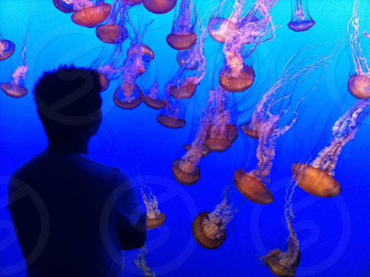 Man and Jelly Fish photo