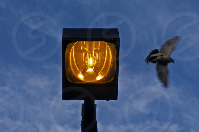 Bird Taking Off From Atop Lamp photo