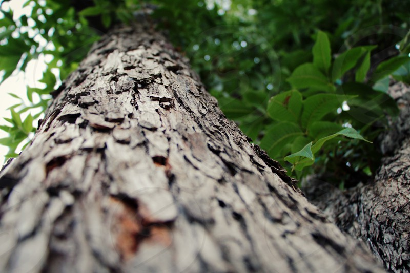 Close up of a tree with a narrow depth of field at cold weather. photo