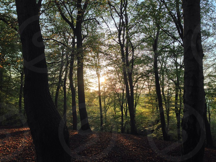 Dusk at Marlow woods photo