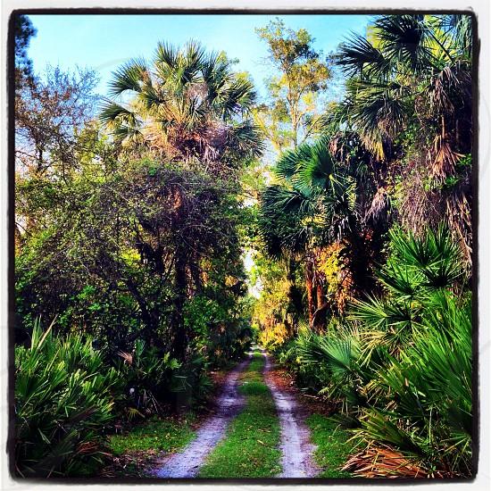 Seminole Woods Florida photo