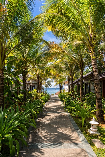 Picturesque tropical place in Vietnam. Path to the beach under green palm trees photo