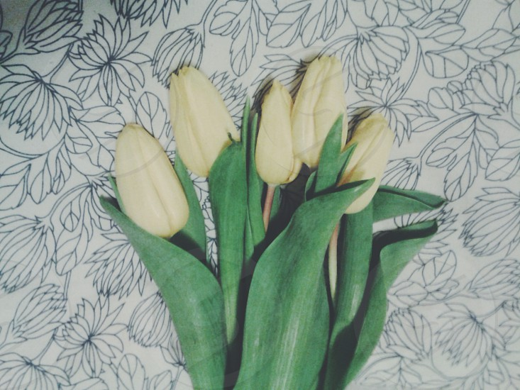 yellow tulips on black and white floral textile photo