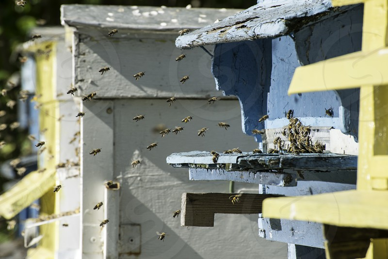 Swarm of bees fly to beehive. Sun light photo