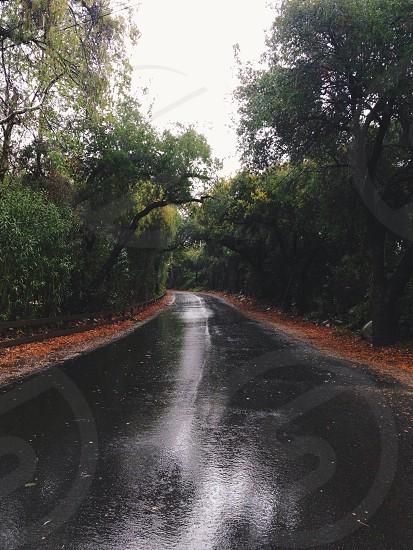 deciduous trees photo