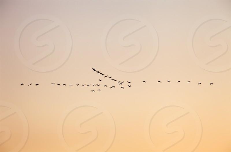 Birds in Flight photo