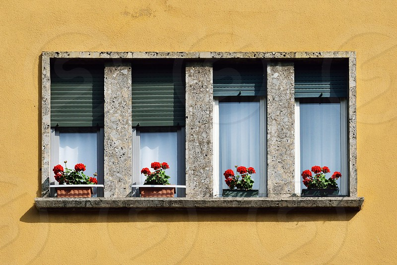 window with geranium photo