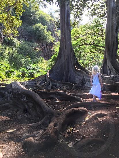 Kauai Hawaii Allerton Gardens prehistoric trees fig tree tree roots girl fairy magical nature landscape garden travel photo