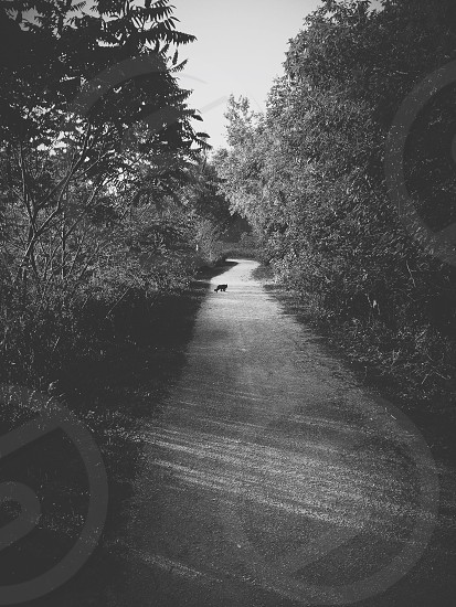 Cat on the Path photo