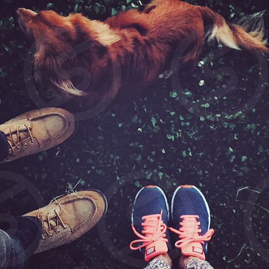 brown long haired dog and blue and orange athletic shoes photo