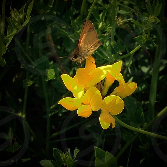 A beautiful golden flower with a little butterfly.  photo