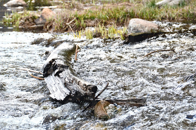 Water rushing by a chilled log. Colorado stream. photo