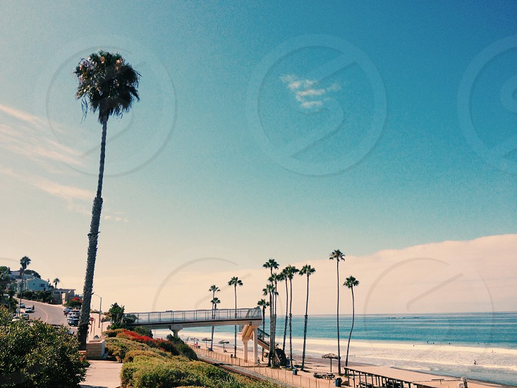 Palm Trees on Beach Sand By Blue Ocean Water photo