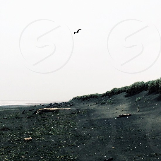 gray sand and bird flying photo
