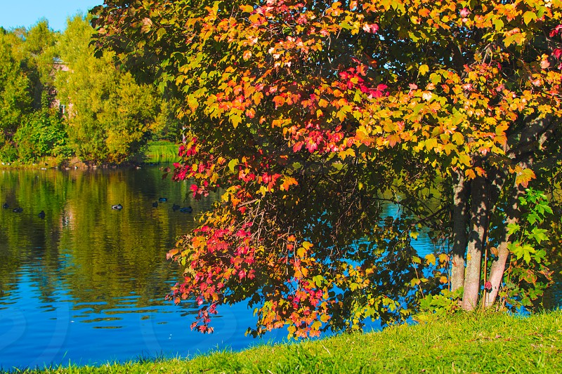 Trees with red yellow and green leaves near lake with blue sky reflecting in water photo