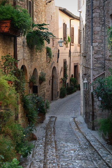 Plants lining the narrow street in a beautiful Umbrian town of Spello in Italy photo