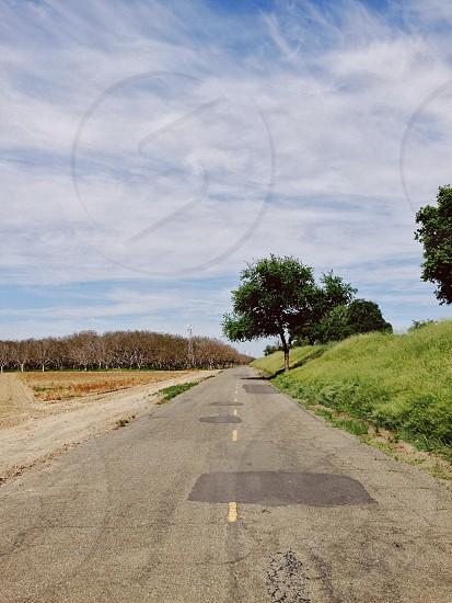 grey roadway next to trees photo