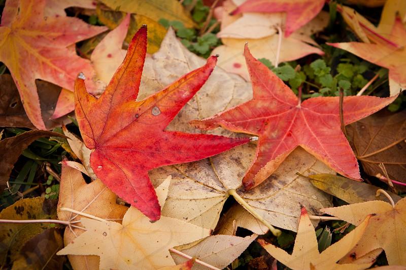 fall Autumn colors leaf leaves photo