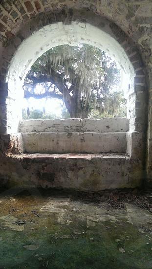 George Washington Oak tree Hampton Plantation SC photo