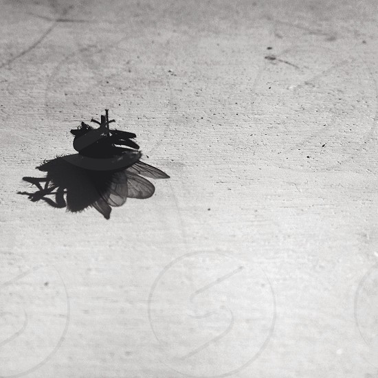 black wasp on grey ground photo